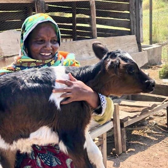 Bandari project staff member holding baby calf